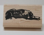 Border Collie Sleeps, Sly Molly, Rubber Stamp