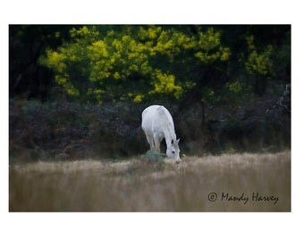 White Horse Grazing, Animal Photograph, Surreal Photography, 9X6 Photograph, Home Decor, Wall Art