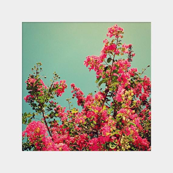 Crepe Myrtle Photo, Girly Wall Decor, Hot Pink Flowers, Magenta Aqua Art, Feminine Wall Art, Bright Colors Art, Charming Art Print, Pretty