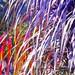 Photograph orange purple violet fuschia  nature plant floral garden arboreteum  wall decor