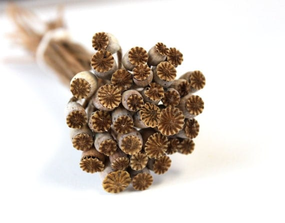Organic home grown dried poppy pods natural rustic woodland fall decor brown cream gray rust