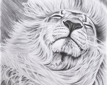 "Lion Pencil Drawing Artwork. Giclee Print of Original ""Daydreamer"""