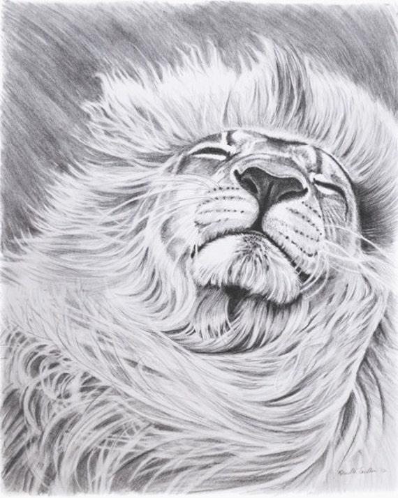 Cheetahs   Pencil Drawings Of Tigers   Pencil Drawings Of Lions FaceEasy Pencil Drawings Of Lions