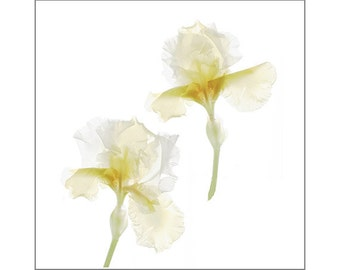 Iris Botanical Print, Scanned Flower Photography, Sheer X-Ray, White Wall Art, Cottage Chic Decor, Nursery Decor