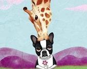 Boston Terrier and Giraffe Dog Art Print