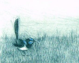 Etching, Fine Art, Hand Pulled Original Print, Australian Native BIrd, Blue Wren, Bird Art,