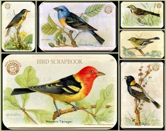 Digital Collage Birds Sheet Vintage