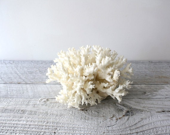 Vintage Chunk of White Coral