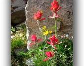 Red Flower Card Set -Indian Paintbrush Wildflower -Blank Note Card Set -Greeting Card Set -Birthday Card -Blank Card Set of 6