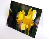 SALE - Spring Yellow Daffodil  - BLANK 4x6 Photo NoteCard