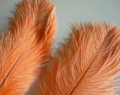 OSTRICH PLUMES , 1 piece, Peach, Flamingo Pink / 540