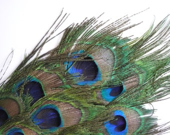 FEATHER PADS Peacock Eye Feather / 42