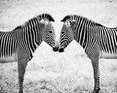 Two Zebras Black & White Fine Art Photograph