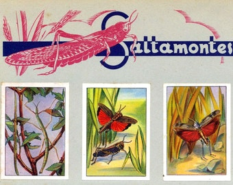 1932 Vintage Spanish Sheet of Illustrations on Grasshoppers and Crickets / Saltamontes y Grillos. Sheet 10