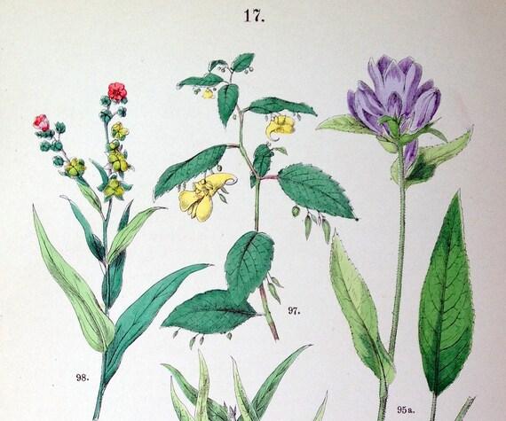 1881 Antique Hand-coloured Botanical Plate (17)