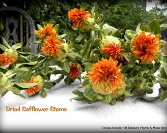 SALE:Dried Safflower (Carthamus)-Yellow flowers-Orange Flowers-Wedding Flowers-Fall Colors on Long Stems-Approx 4 oz bunches