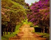 "Brazil Nature photograph. At Fazenda Cachoeira da Grama, Minas Gerais, Brazil 5"" x 5"" Photo"