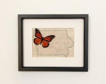 Framed Map of Iowa Natural History Display Real Butterfly