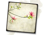 Branche de Magnolia - 8x8 Fine Art Print - Nature Photography - For Tree Lovers - Etsy Wall Art - TFTeam - Flower Photograph