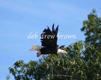 Fly Like an Eagle and this one is in Michigan.