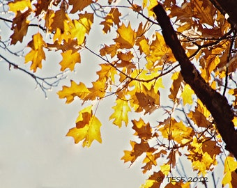 Autumn Leaves - Fall Leaves Photo - Nature - Golden Leaves