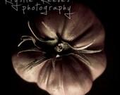 Heirloom Tomato - 5x5 Fine Art Photograph