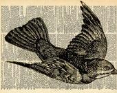 Vintage Bird Print - Recycled Antique Book Art - Natural History Bird Illustration - Bird Feathers Dictionary Print