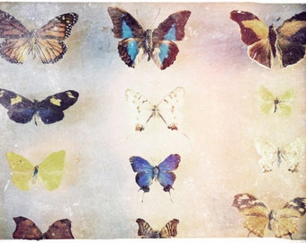 "Butterflies Fine Art Photograph ""The Butterfly Collector"" Dreamy Colorful Photo - Natural History Print - Moths Bugs Insect Collection"