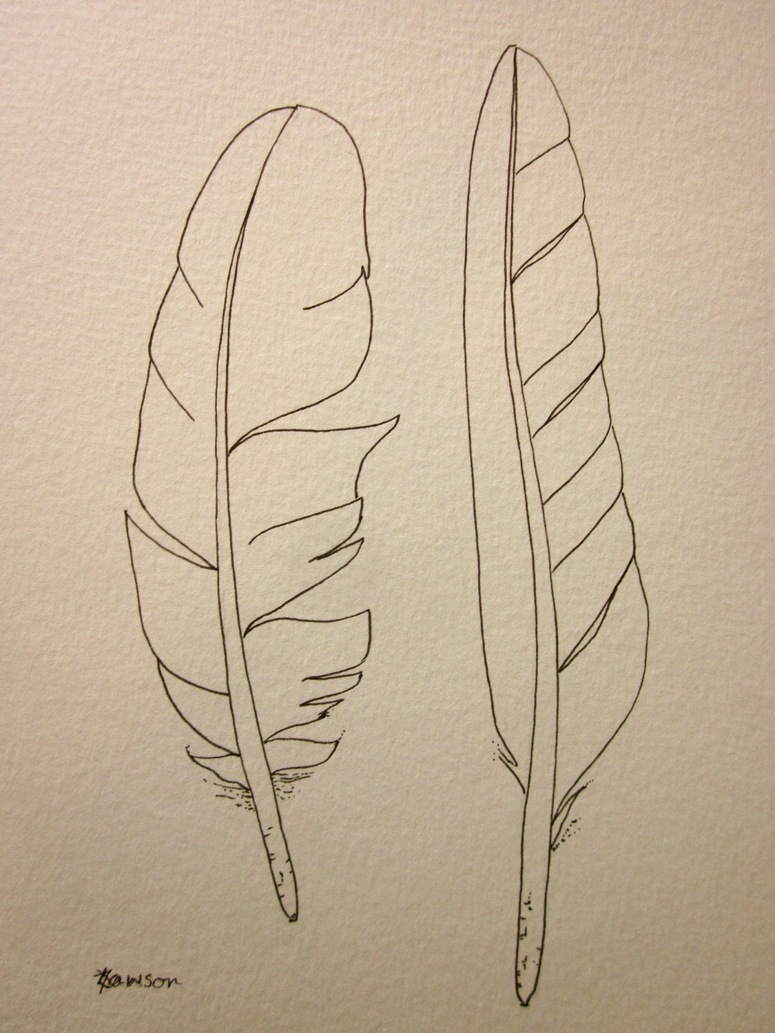 2 sea bird feathers original ink drawing by anne4bags on Etsy