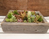 RESERVED For Ariel, 10 RUSTIC Centerpieces, Comes Assembled With Soil, Moss And Succulents, Pick Up October 25th
