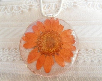 Orange Daisy Pressed Flower Round  Domed Glass Pendant-Nature's Wearable Art-Symbolizes Innocence, Loyal Love