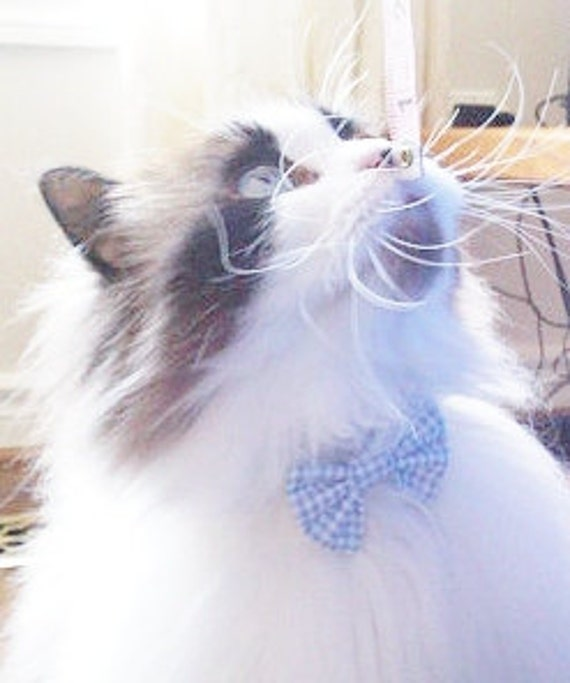 Blue and White Seersucker Break Away Bowtie Collar for Cats