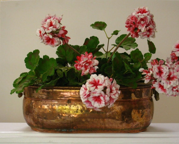 Large Copper Oval Planter with Decorative Heavy Brass Handles French Country Home Garden Decor Copper Pot