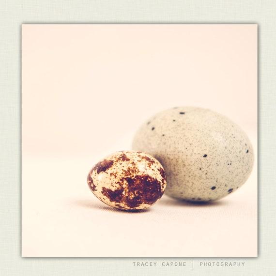 "Food Photography: Neutral Kitchen Decor. Egg Photograph  ""Oeufs""  Spring Decor. Quail eggs. Soft Brown. Robin Egg Blue. Kitchen Decor"