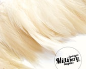 Ivory Hackle Feather Fringe for fascinators, millinery and crafts (Around 60 feathers)