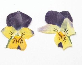 Tiny Pressed Pansies Crafting Supplies