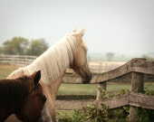 Horse Photography pasture western country rustic farm barn