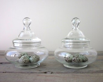 Glass Apothecary Jars Set of Two