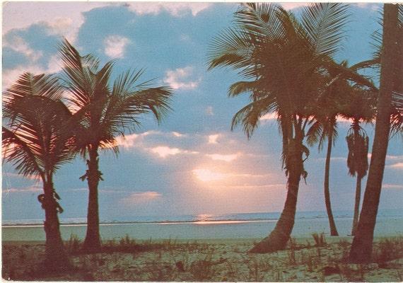 Vintage Florida Postcard - Palm Trees Special Beauty Sunrise Peaceful Ocean