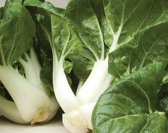 Cabbage, Organic Toy Choy Pac Choi Seeds - Perfect, Fast Growing Chinese Cabbage