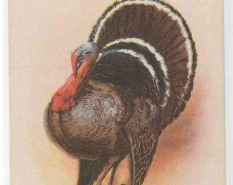 Thanksgiving Day Turkey Wishes 1910s postcard