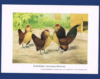 Vintage Poultry Art Print - Switzerland - Europe