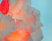 Hypnotic Rhoddie - 8 x 12 Fine Art Digital Flower Photo Print - Beautiful Spring Blooms - looks like a vivid watercolor painting
