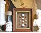 Bird Egg Specimen Box - Ornithology Museum - Victorian Framed - Wunderkammer