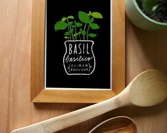 Basil Herb Print - Mediterranean Garden Art - high quality fine art print