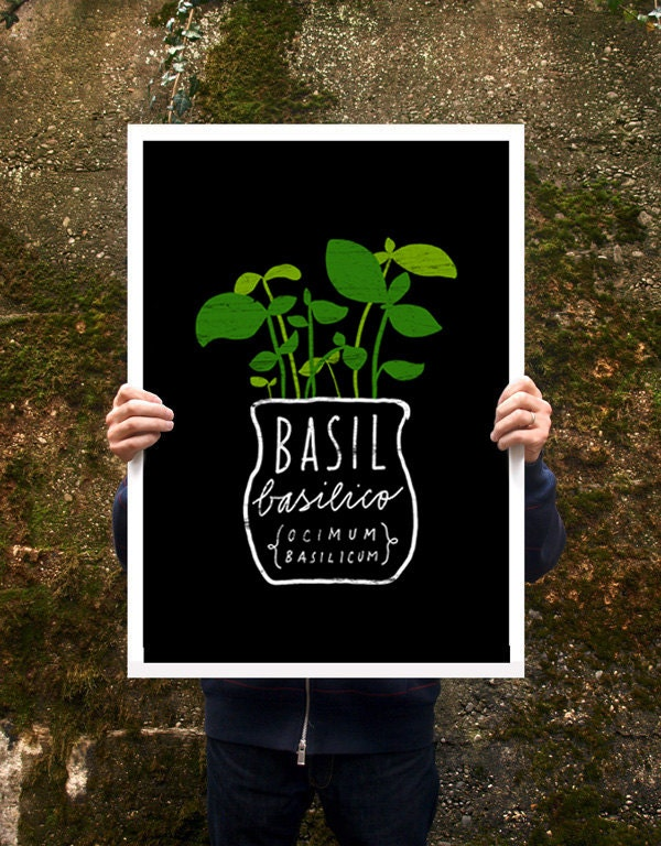 Basil herb italian green kitchen poster print for Italian kitchen prints