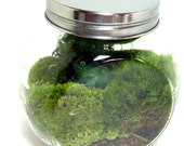 TERRARIUM, Large CARMIE Jar, Glass, Frog, Moss, Great for HOME or Office.  Terrariums by mossterrariums on Etsy.