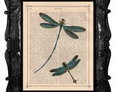 Beautiful DRAGONFLY vintage print teal DRAGONFLY antique art print dragonfly on 200 year old antique book page music dragonflies art