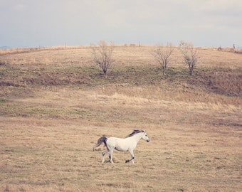 Running White Horse Photograph | Western Landscape Print