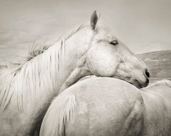 Black and White Horse Photograph, Animal Photograph, Equine Art, Black and White Animal Photography